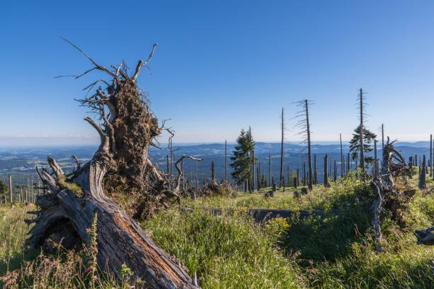 Landscape on the mountain of great Rachel in the Bavarian Forest, Germany stock photo