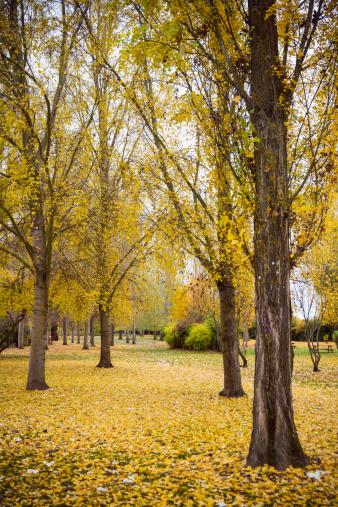 Landscape Park in Autumn - Paisaje de Parque en Otoño
