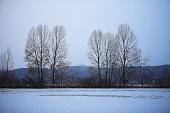 a wintry landscape