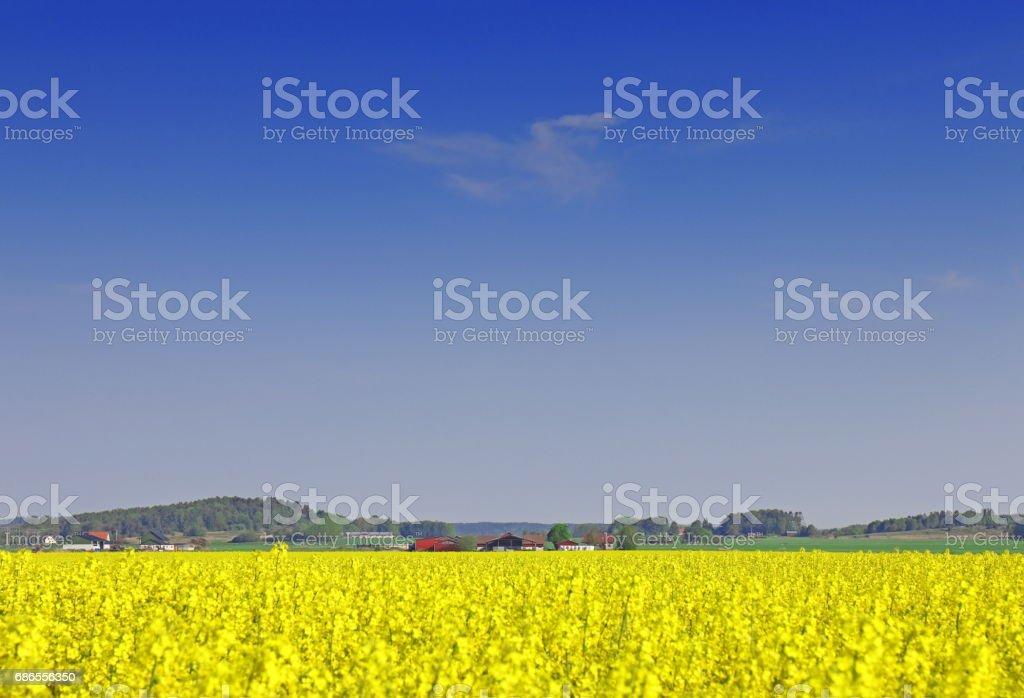 Landscape foto stock royalty-free
