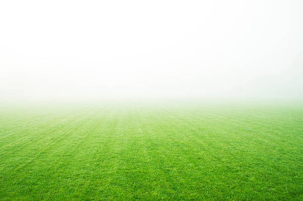 A landscape picture of a green field covered in fog Field in the fog soccer field stock pictures, royalty-free photos & images