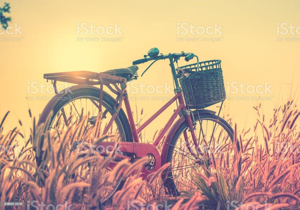 Fotografía de Paisaje Cuadro Bicicleta Vintage Con Campo De Hierba ...