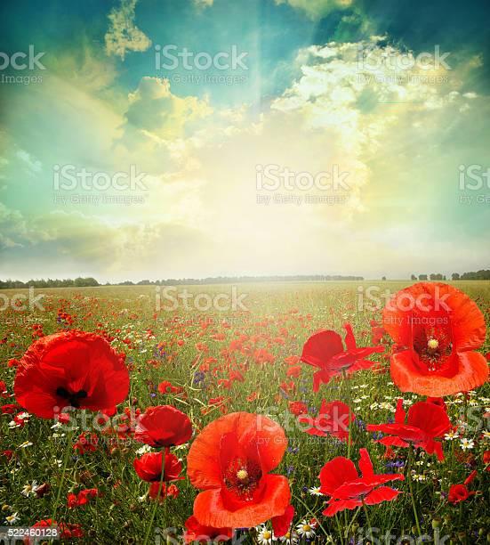 Landscape poppy flowers picture id522460128?b=1&k=6&m=522460128&s=612x612&h=ahsuinaycy6sffodvau9v3hli7kbbasdqjk7zev 8zc=