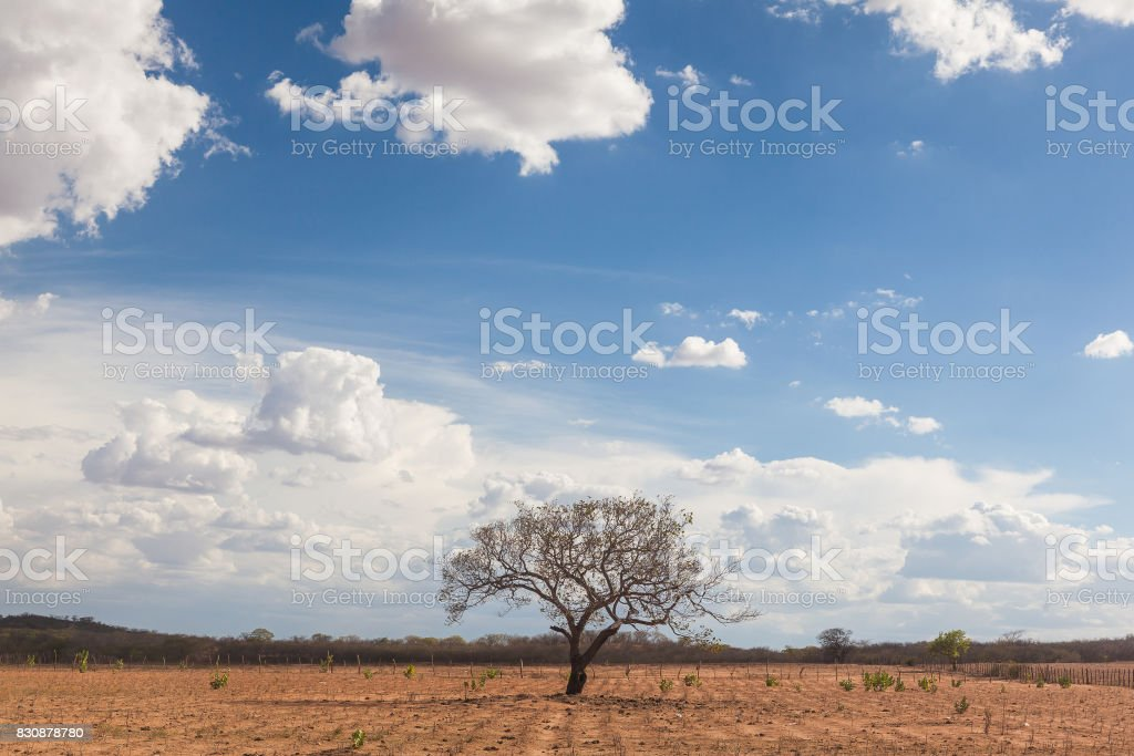 Landscape punished by long dry weather at northeastern region of Brazil stock photo