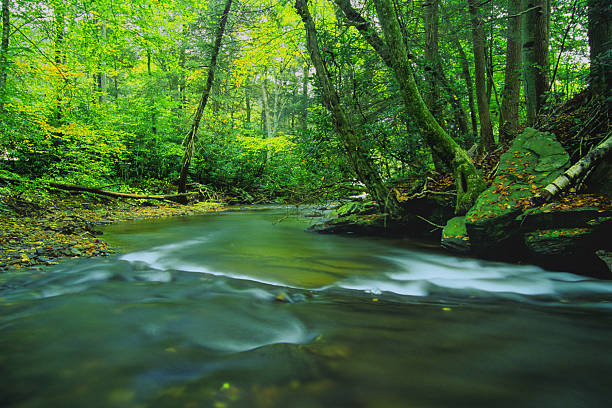landscape river forest green stock photo