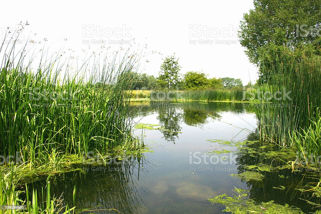 Landscape, River side stock photo