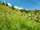 Landscape scenery in the Bucegi Mountains, part of the Carpathian Mountains.