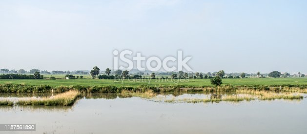 istock Landscape Scenery of Agriculture field in Agrarian India. Traditional Rice farm horizon during monsoon (July August September). Tropical green idyllic countryside harvest of Indian agricultural land. 1187561890