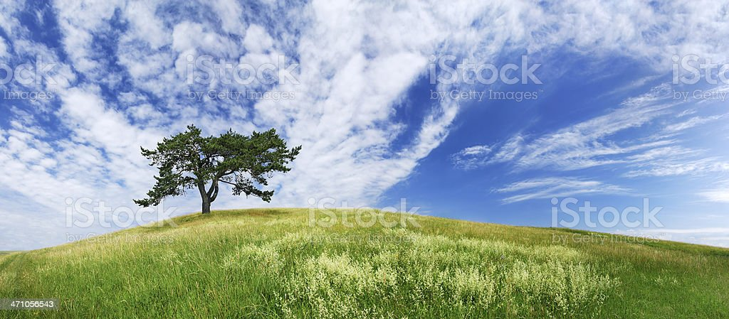 Landscape - see description royalty-free stock photo