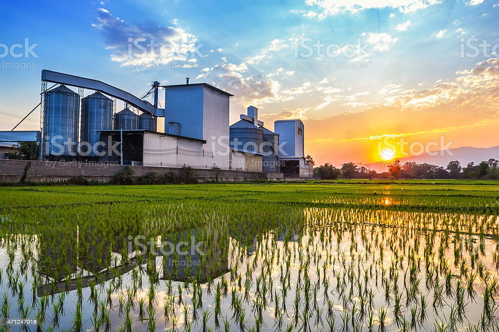 Landscape shot rice mill with reflection and sunset stock photo