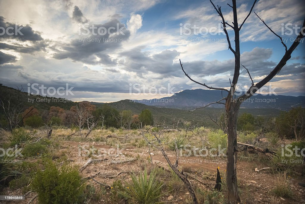 landscape sky and tree with trail royalty-free stock photo