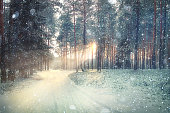 January winter landscape in the forestfrosty winter landscape in snowy forestlandscape snow trees dense forest in winter