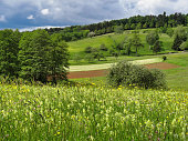 A hot summer day in southern germany with a great view, trees and a cloudy blue sky.