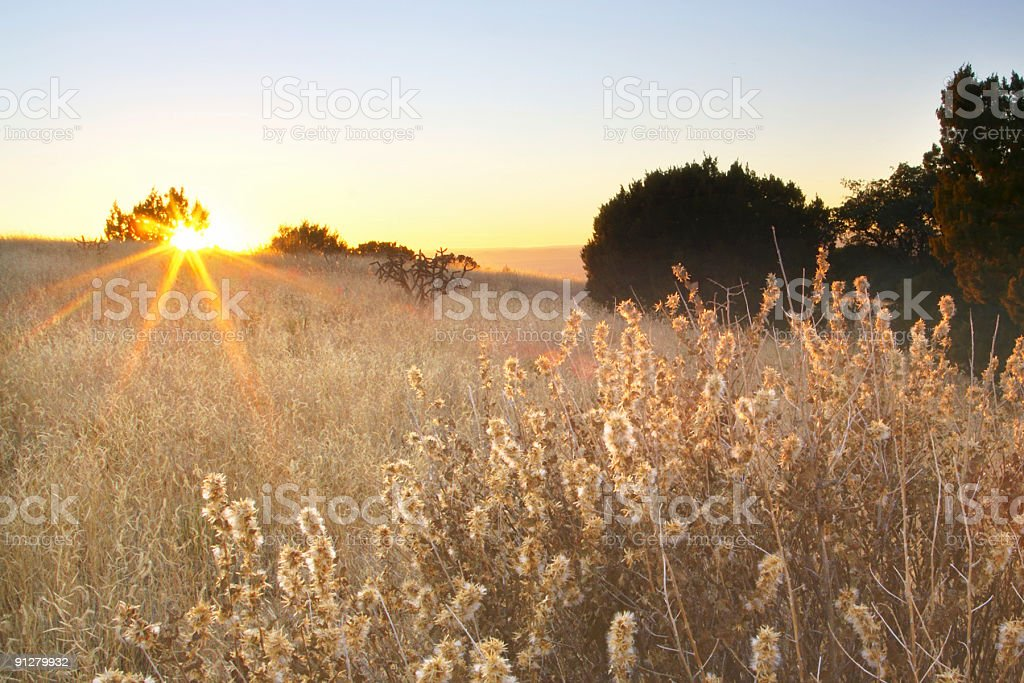 landscape sunset meadow royalty-free stock photo
