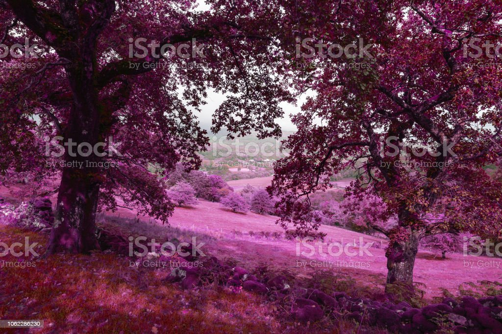 Landscape surreal alternative color  image of view from Precipice Walk in Snowdonia overlooking Barmouth and Coed-y-Brenin forest during rainy afternoon in September stock photo