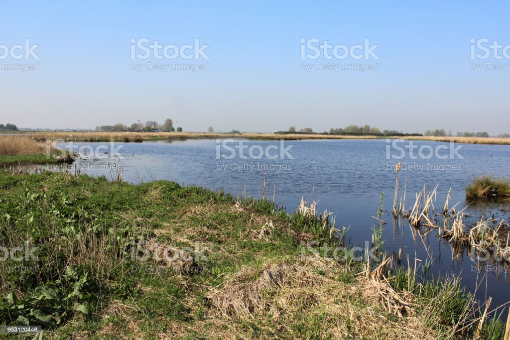 Landscape swamp and lake, Nieuwkoopse Plassen, in the Netherlands, during spirng stock photo