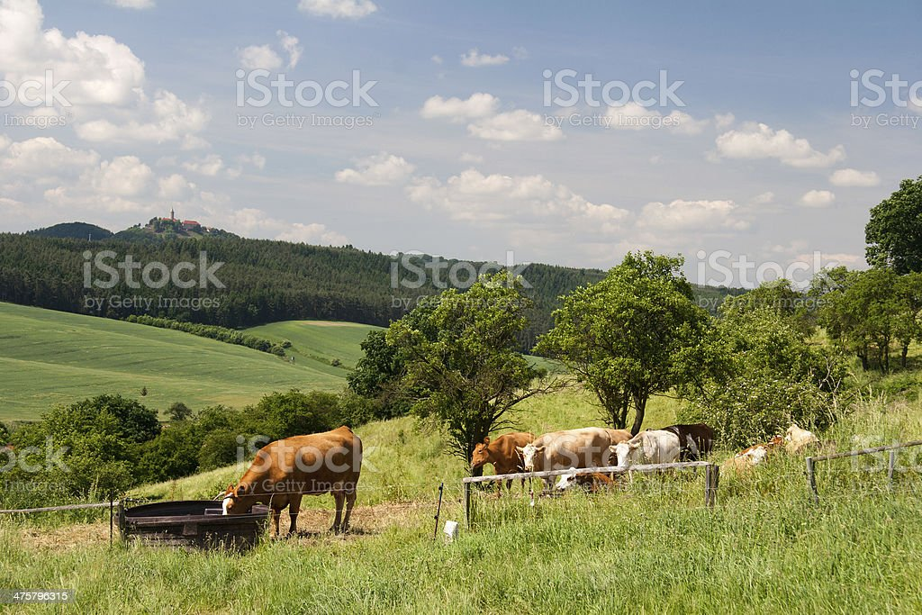 Landscape Thuringia with cow stock photo