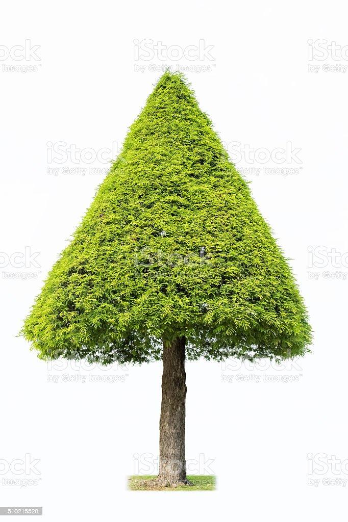 landscape tree isolated stock photo