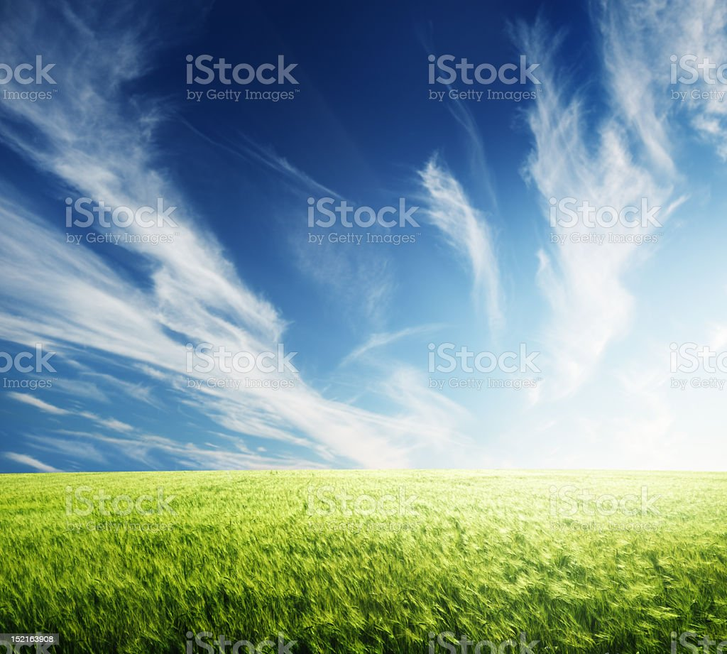 Landscape view of a barley field under the sunlight royalty-free stock photo