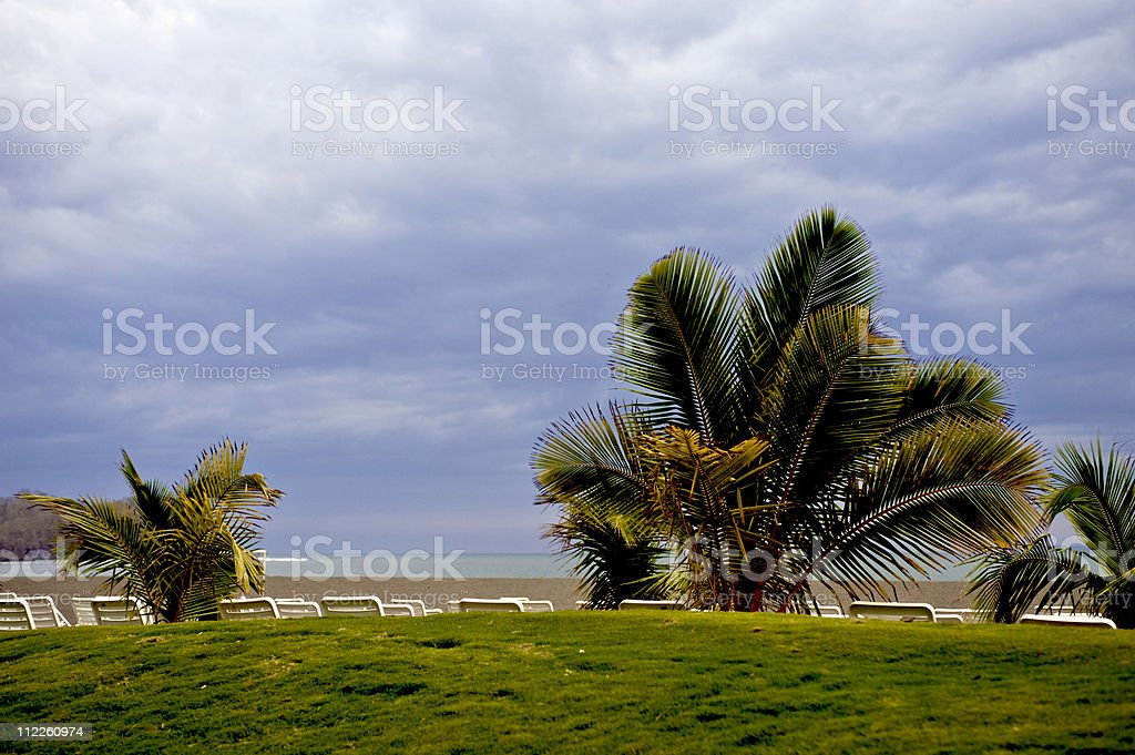 Landscape view of a palm trees against a blue sky royalty-free stock photo