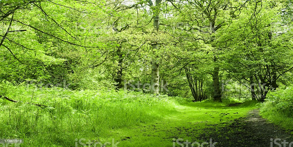 A landscape view of a woodland with full of grass royalty-free stock photo