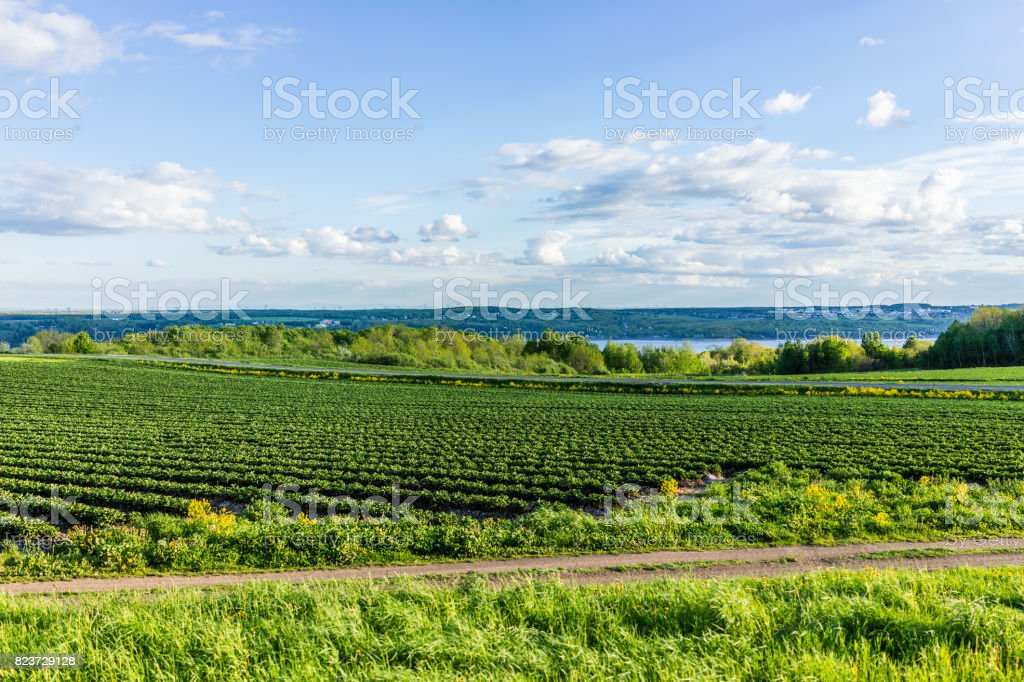 Landscape view of farm in Ile D'Orleans, Quebec, Canada with green rows of plants stock photo
