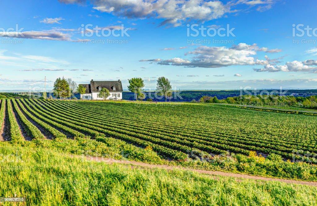 Ile D'Orleans, Quebec, Kanada ev grupta görünümünü manzara - Royalty-free Ahşap Stok görsel