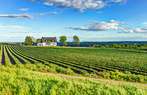 istock Landscape view of farm in Ile D'Orleans, Quebec, Canada with house 968626210