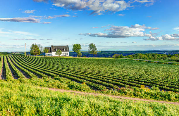 landscape view of farm in ile d'orleans, quebec, canada with house - rural scene stock pictures, royalty-free photos & images