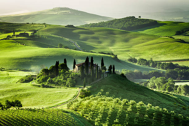 Landscape view of green olive groves and vineyards stock photo