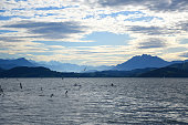 Landscape view of Lake Zug with flying seagulls and kayaks floating on it and with cirrus clouds on the blue sky and mountain ranges of Rooterberg in the distance