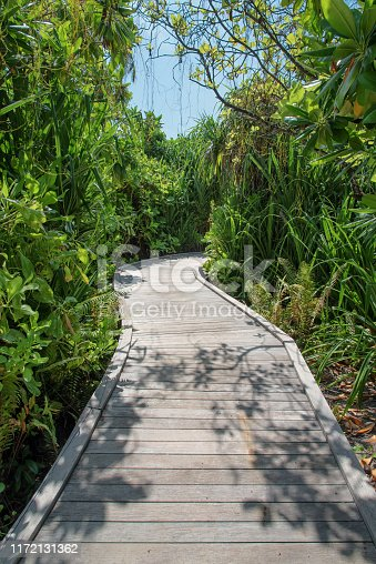 Landscape view of tropical garden path