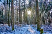 Picture shows a landscape view on a forest at winter in Germany.