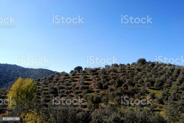 Landscape view via verde sierra norte de sevilla picture id823564166?b=1&k=6&m=823564166&s=612x612&h=26ej8qt54efs9sjpmbn4ged1xnstto4gwno9hzzoa8g=