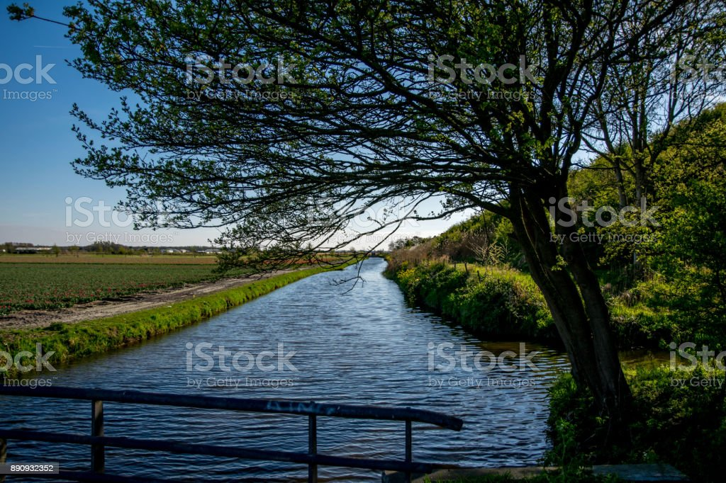 landscape view with colorful flowers background in Netherlands stock photo
