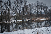 Winter water surrounded by snow and shrubs