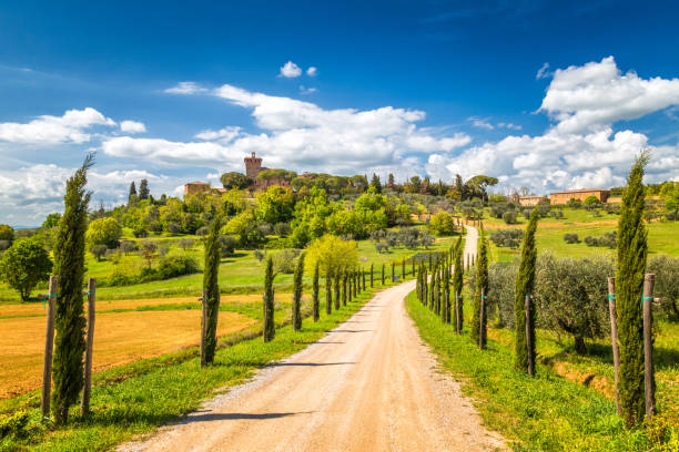 Landscape with a cypresses lined path. Landscape with a cypresses lined path to Palazzo Massaini, an architectural complex located on a hillside near Piezna town in Tuscany, Italy. pienza stock pictures, royalty-free photos & images