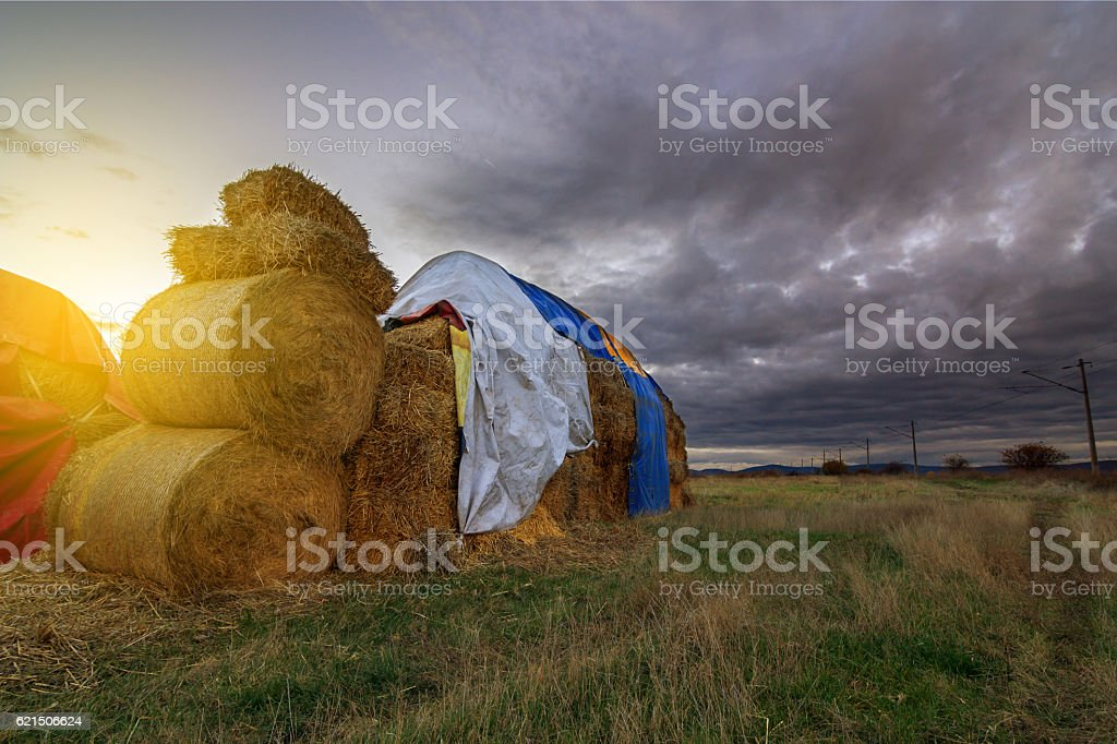 Landscape with a field full of hay bales at sunset foto stock royalty-free