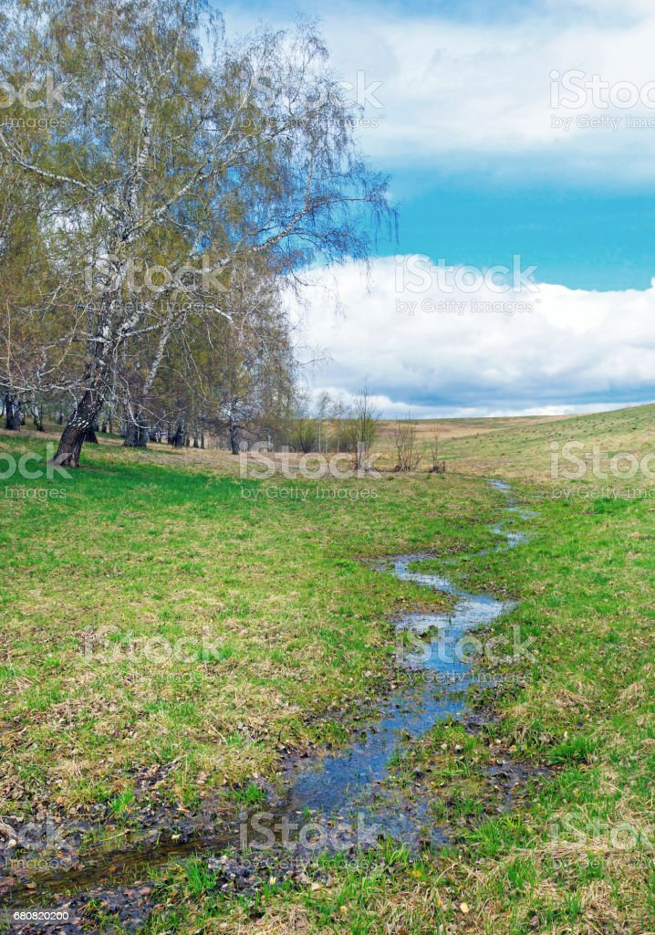 Landscape with a little runlet on the field in sunny cloudy day in springtime stock photo