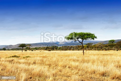Landscape with grasslands and acacia trees in world's largest caldera,Tanzania. Home to the Big Five.