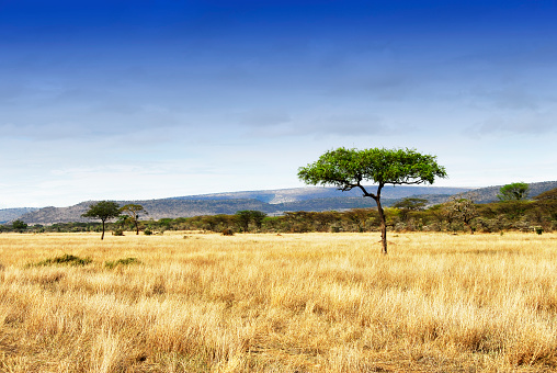 istock Landscape with acacia trees in the Ngorongoro Crater, Tanzania 586943724
