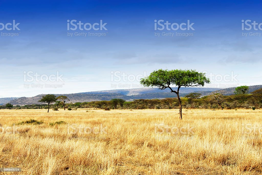 Landscape with acacia trees in the Ngorongoro Crater, Tanzania stock photo