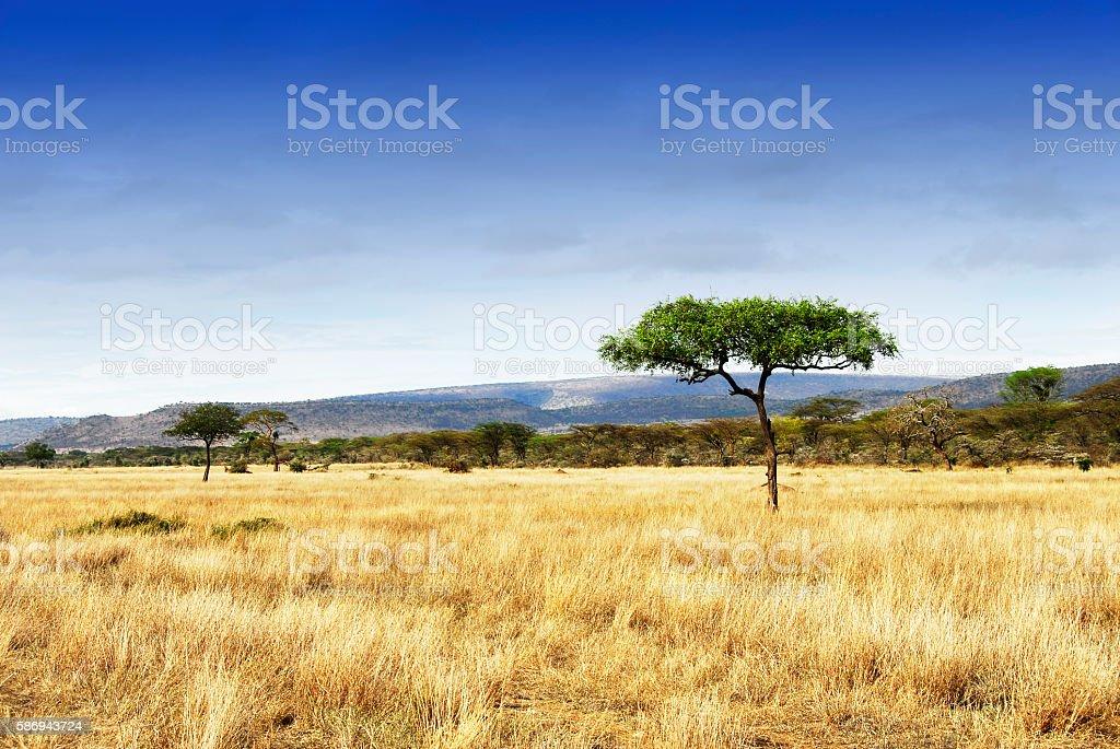 Landscape with acacia trees in the Ngorongoro Crater, Tanzania stock photo