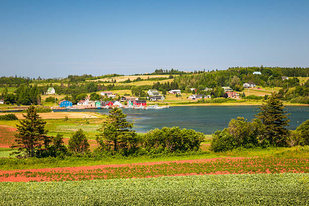 landscape with bay in prince edward island canada - prince edward island stock photos and pictures