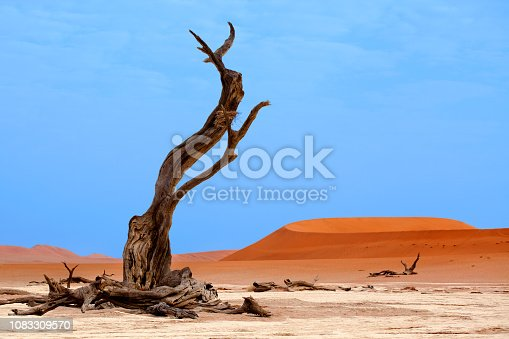 1083309578 istock photo Landscape with big dead dry tree on orange sand dunes and bright blue sky background, Naukluft National Park Namib Desert, Namibia, Southern Africa 1083309570