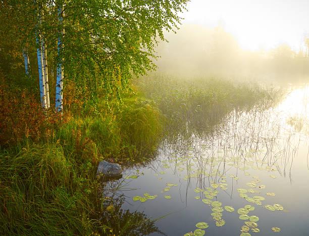 Paisaje con lago de birch, y verde hierba. TM - foto de stock
