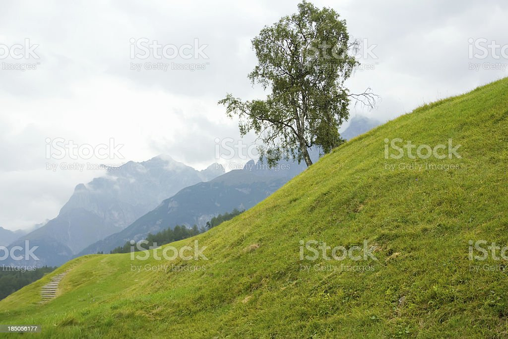 landscape with birch trees on a background of mountains royalty-free stock photo