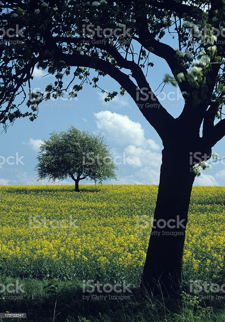 Landscape with blossoming tree  (image size XXL) royalty-free stock photo