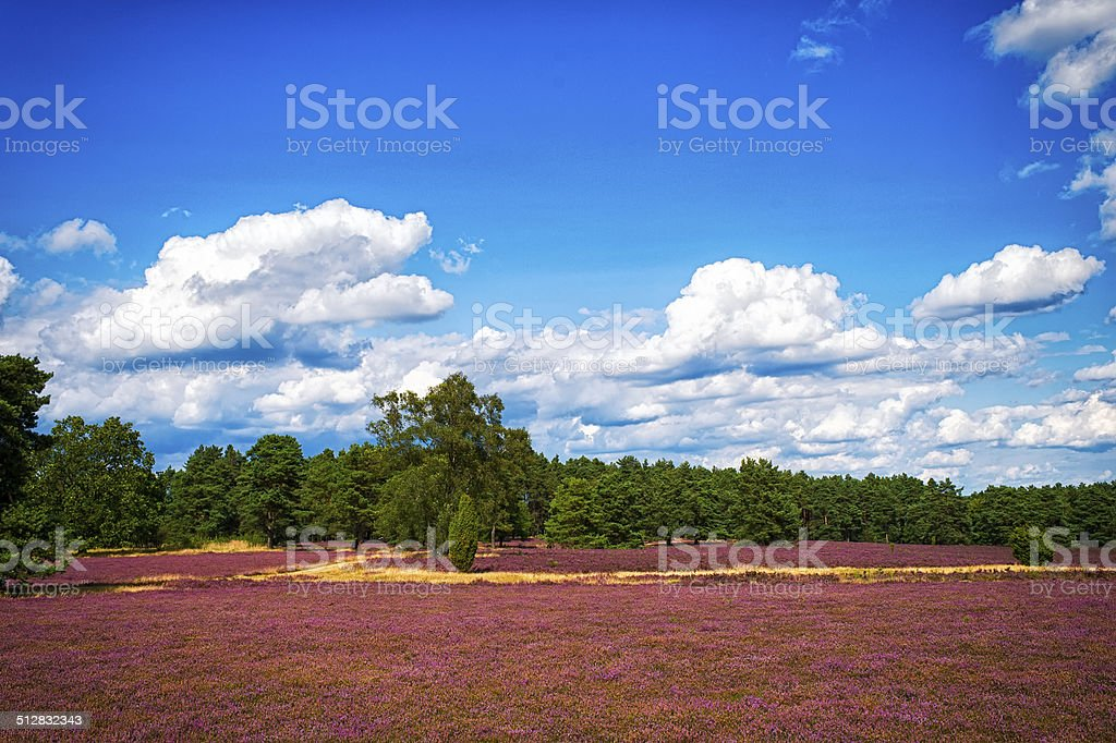 landscape with blue sky, clouds, trees and and heide meadow stock photo