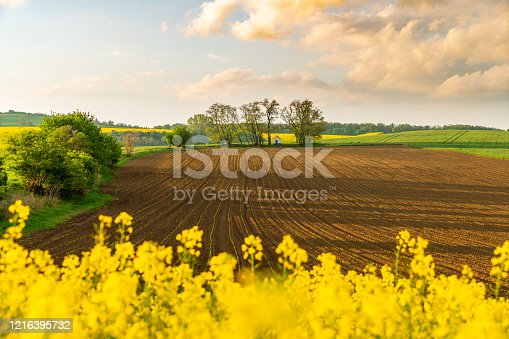 Countryside landscape with a large brown field and rapeseed in the foreground, Moravia, Czech Republic